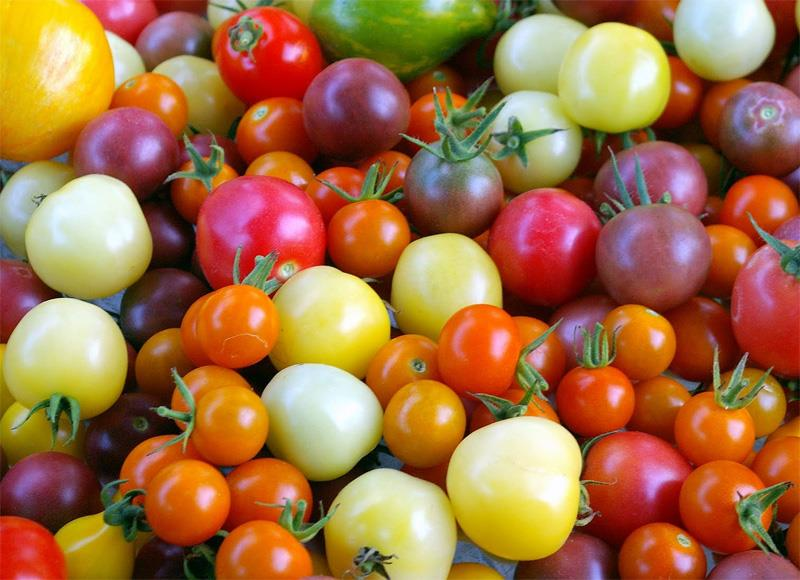 Russia has announced a ban on imports of greenhouse tomatoes and peppers from Uzbekistan's largest export region, citing ToBRFV concerns.