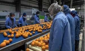 الصادرات الزراعية المصرية تنتصر على كورونا خلال عام 2020 وارتفاع الصادرات لأكثر من 5 ملايين طن