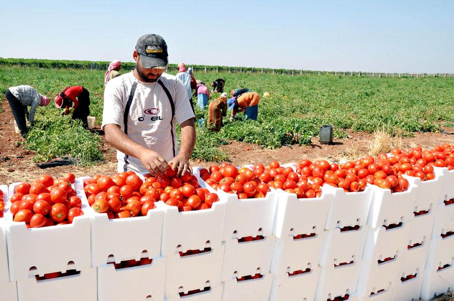 مطالبات بتمديد إعفاء السلع الزراعية المعدة للتصدير